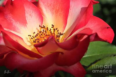 Photograph - Betty's Bloom by Geri Glavis