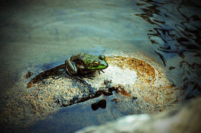 Photograph - Between A Frog And A Hard Place by Holly Blunkall
