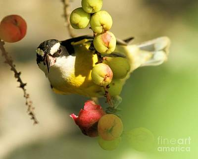 Photograph - Between Berries by Adam Jewell