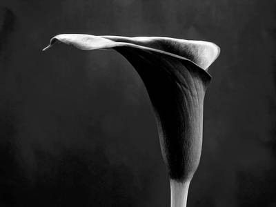Art Black And White Flowers Photography Art Print by Artecco Fine Art Photography