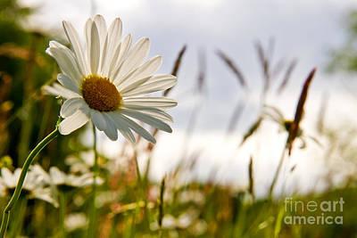 Violett Photograph - Between The Grass by Christine Sponchia