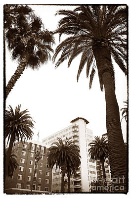 Photograph - Between The Palms In Santa Monica by John Rizzuto