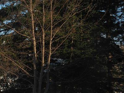 Between The Trees Art Print