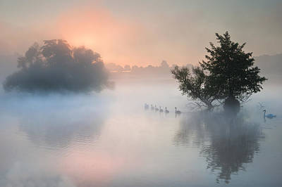 Ganders Photograph - Bevy Herd Of Swans On Misty Foggy Autumn Fall Lake by Matthew Gibson