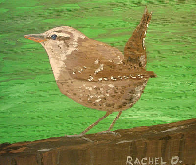 Bewicks Wren Ready To Take Flight Art Print by Rachel Dickson