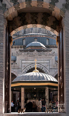 Photograph - Beyazit Cat by Rick Piper Photography