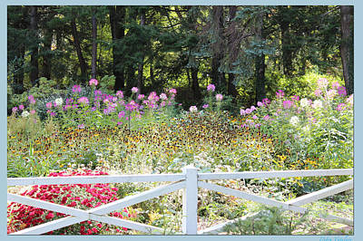 Photograph - Beyond The Fence by Debra     Vatalaro