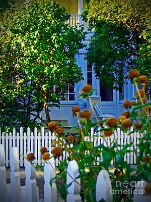 Photograph - Beyond The Fence by Desiree Paquette