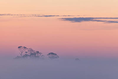 Photograph - Beyond The Fog by Denise Bush