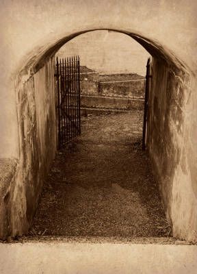 Photograph - Beyond The Gates by Marilyn Wilson