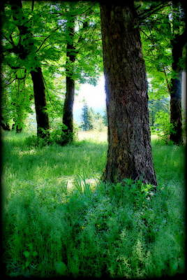 Photograph - Beyond The Trees by Kathy Sampson