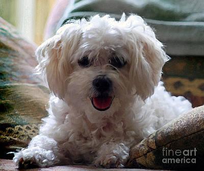 Funny Dog Digital Art - Bichon Frise Dog Portrait by Karen Adams