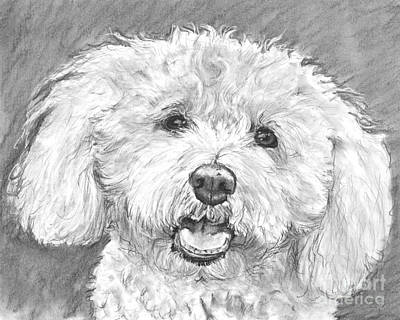 Drawing - Bichon Frise With Long Hair by Kate Sumners
