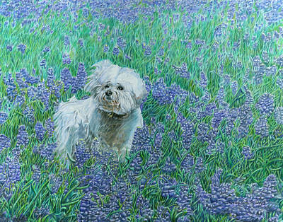 Drawing - Bichon In The Bluebonnets by Dominic White