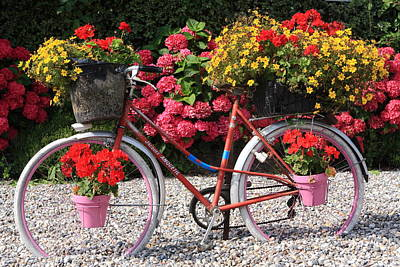 Photograph - Bicycle Floral Display by Aidan Moran