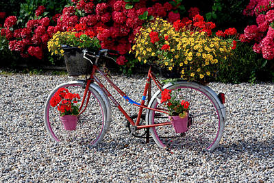 Photograph - Bicycle Of Flowers by Aidan Moran