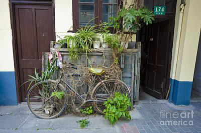 Bicycle Trellis Print by John Shaw