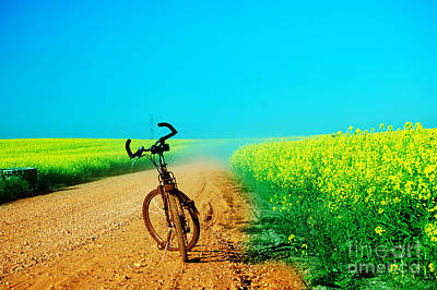 Cycle Photograph - Bicycle Trip At Summer by Michal Bednarek