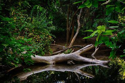 Photograph - Bidwell Park Scene by Robert Woodward