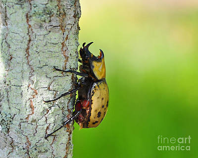 Photograph - Big Bad Beetle by Al Powell Photography USA