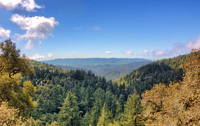 Photograph - Big Basin Redwoods by Brent Durken