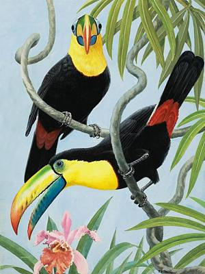 Orchid Art Painting - Big-beaked Birds by RB Davis