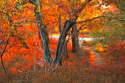Katharine Hepburn - Big Bear Mountain Autumn by William Rockwell