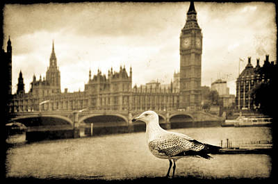 Photograph - Big Ben And The Seagull by Jennifer Wright