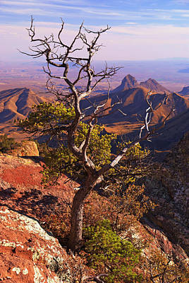 Photograph - Big Bend Tree II by Daniel Woodrum