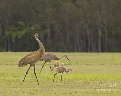 Photograph - Big Bird And Babies by Carol McCutcheon