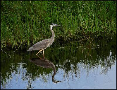 Photograph - Big Bird by Rick Mosher