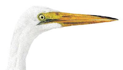 Big Bird Art Print