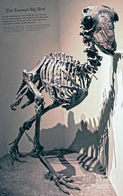 Photograph - Big Birds Bones by Gregory Dyer
