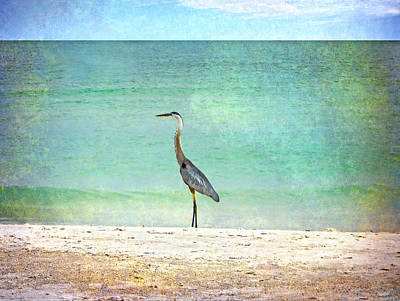 Photograph - Big Blue Heron by Judy Hall-Folde
