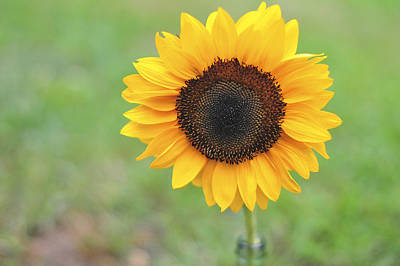 Big Bright Yellow Colorful Sunflower Art Print Art Print by Terry DeLuco