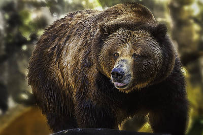 Photograph - Big Brown Bear by Donald Brown