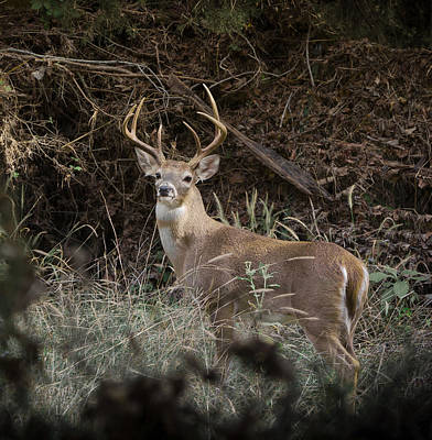 Photograph - Big Buck by John Johnson