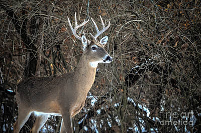 Photograph - Big Buck by Peggy Franz