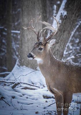 Photograph - Big Buck by Ronald Grogan