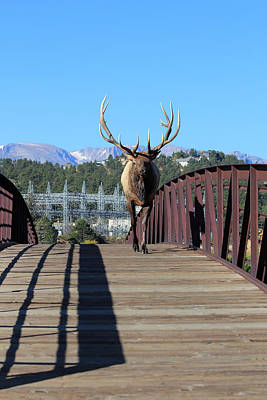 Big Bull On The Bridge Art Print by Shane Bechler