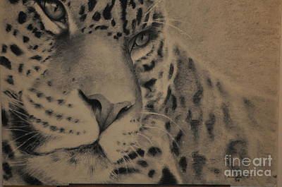 Drawing - Big Cat by Adrian Pickett