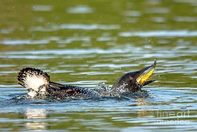 Photograph - Big Catch by Cheryl Baxter