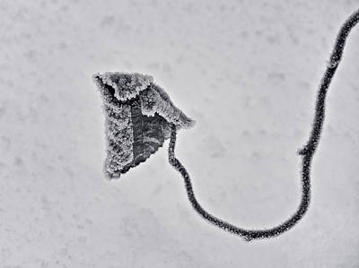 Tendrils Photograph - Big Chill by Odd Jeppesen