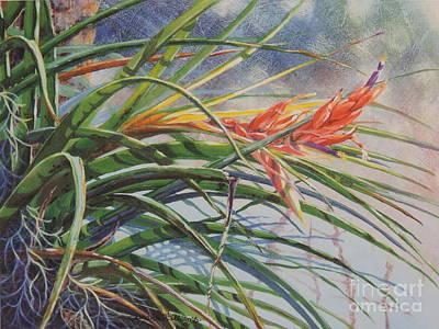Big Cypress Beauty Art Print