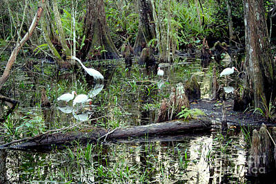 Reptiles Royalty-Free and Rights-Managed Images - Big Cypress by Carey Chen