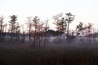 Photograph - Big Cypress Np Sunrise by Jean Clark