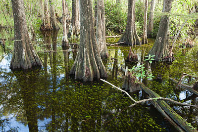 Photograph - Big Cypress Swamp by Doug McPherson