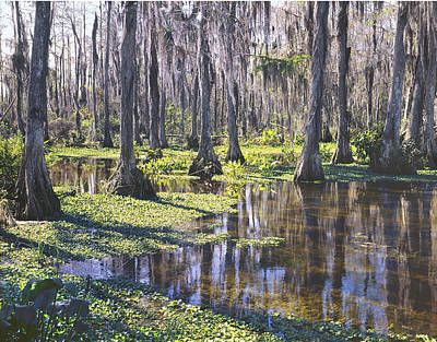 Photograph - 149743-h-big Cypress Swamp  by Ed  Cooper Photography