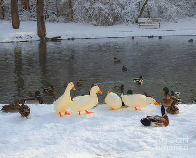 Photograph - Big Ducks In Town by Luther Fine Art