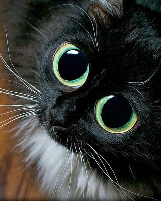 Big Eyed Cat Begging Portrait Art Print by Berkehaus Photography